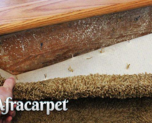 چرا بید زدگی فرش رخ می دهد؟